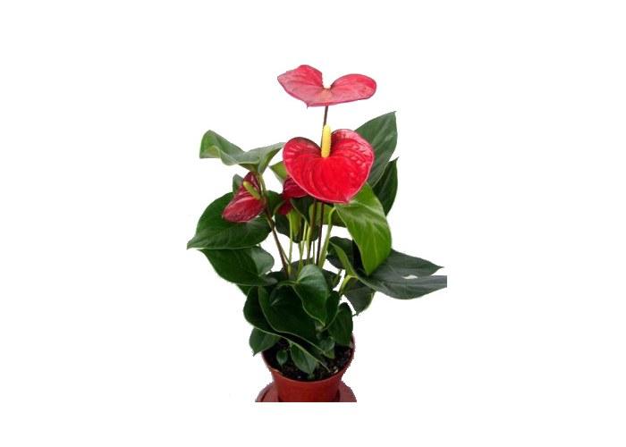 Цветы домашни все мира на